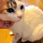703卒業生カノン家へ 保護猫まゆぽんを訪ねて