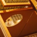 野良猫から家猫への昇格1