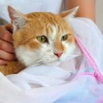 野良猫から家猫への昇格2