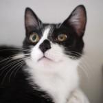 1 運命を変える方法(黒猫たちの力を借りて)