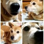 河川敷に生きたゴクウ、私の尊い犬