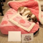 バービーの寝床