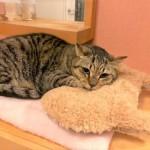 保護猫ミミ玉の勇気