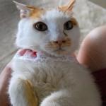 猫の男の口説き方