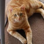 野良猫の家族募集が広げた世界
