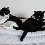 ブサイクな猫とジャンの近況