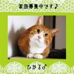 追記 (4)