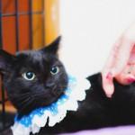 猫の里親募集~お返事する黒猫ビーナスの動画