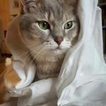 招き猫たちがもたらせてくれた福
