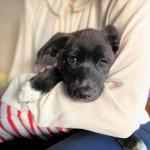 さぶの通院と保護犬つるの写真撮影会
