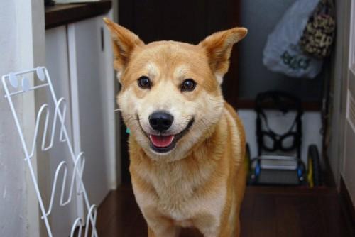 yuzuta (2)
