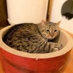 保護猫ミミ玉も椿姫をめざして!
